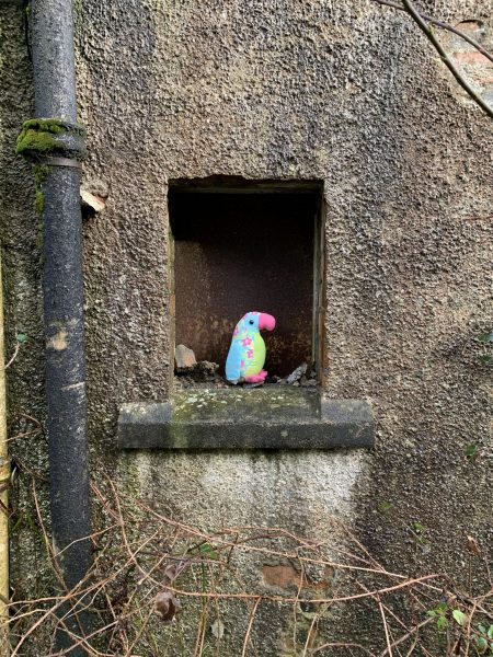 Tannery Hoose Windae #4: funky multi-coloured parrot
