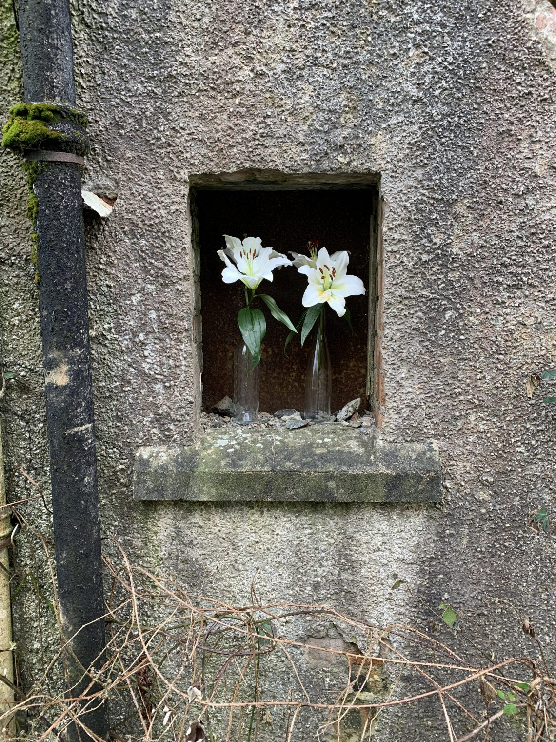 Tannery Hoose Windae #5: Easter Lilies